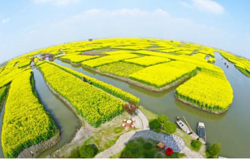 是开发的垛田油菜花风景区